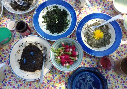 Les bienfaits de la Botanique : « Découverte des plantes sauvages et utilisation culinaire » (atelier)