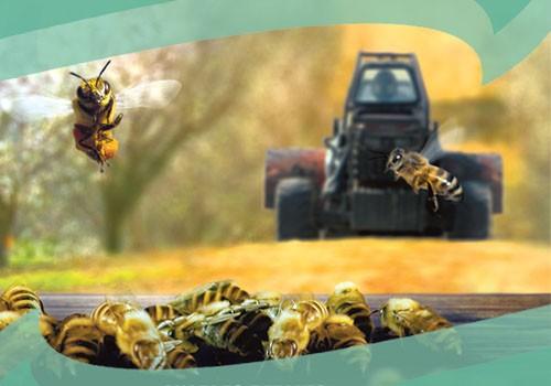 """Film documentaire """"Des abeilles et des hommes"""""""